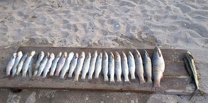 Соленость Азовского моря выросла в 1,5 раза. Бычков и судака стало меньше, запасы пиленгаса и камбалы растут