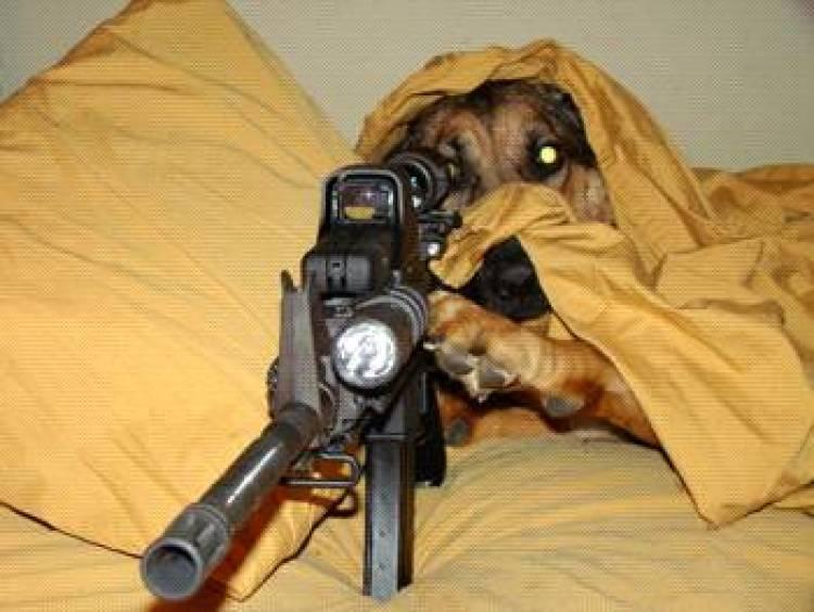 Undercover canine sniper