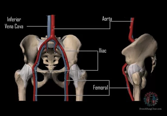 Ammo stopping power vs anatomy Cowan Breach Bang Clear pelvic vitals
