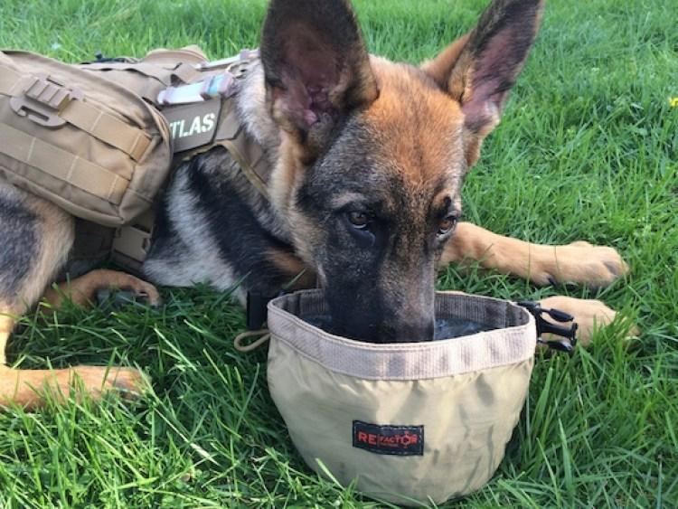 dog, canine companion, puppy, Velo Dog,