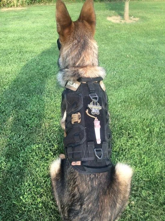 Review Mk Vii Sport K9 Harness From Fight And Flight