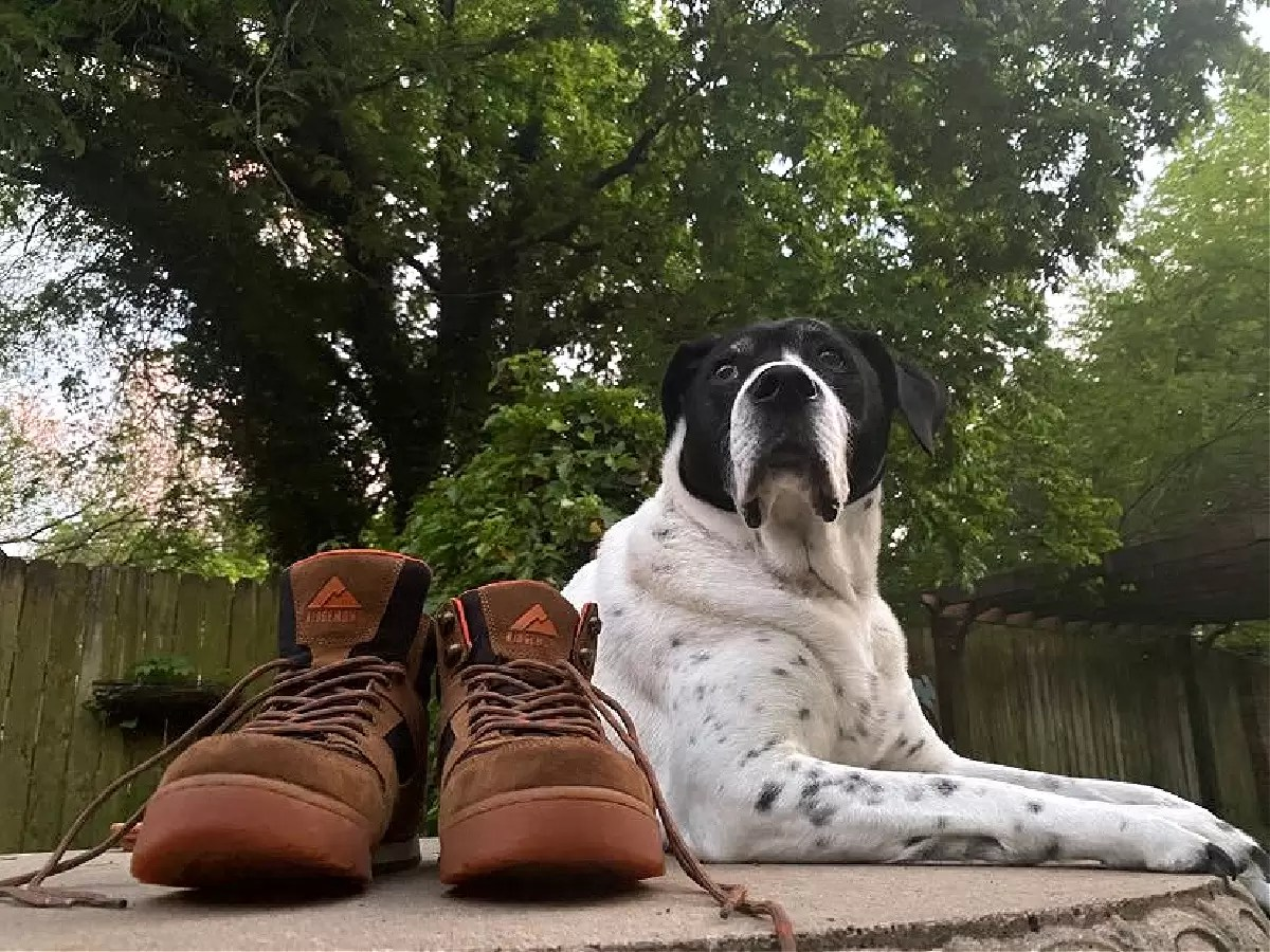 Ridgemont outfitters hiking boots review feature image with dog