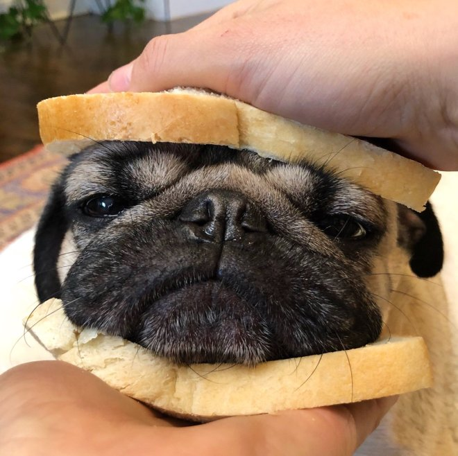 dog head between two slices of bread