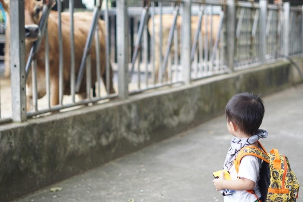 動物性鮮奶油 | 真正取自牛乳的加工製品