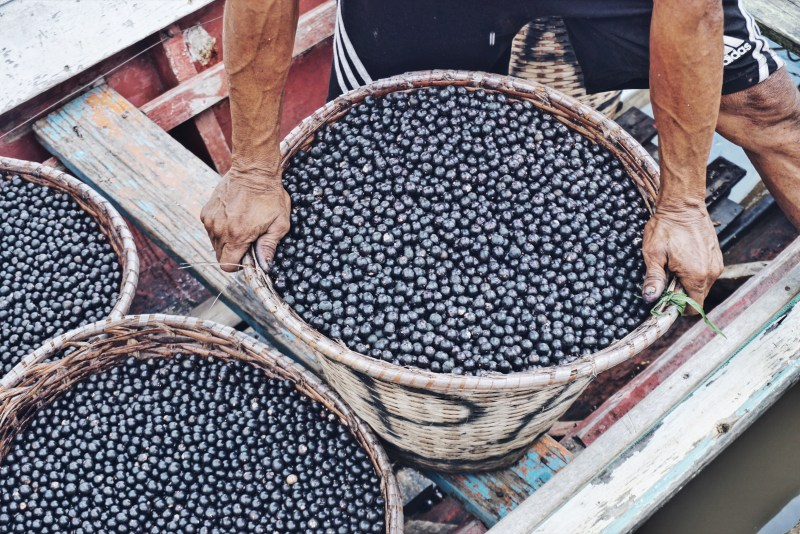 Acai berry harvest in Brazil | Photo: Breakfast Criminals