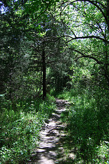 Sac River Trail. Copyright © 2011 Gary Allman, all rights reserved.