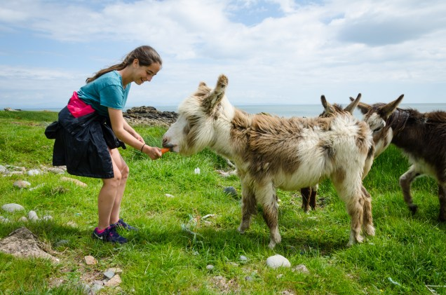 Lanie giving a carrot to a donkey