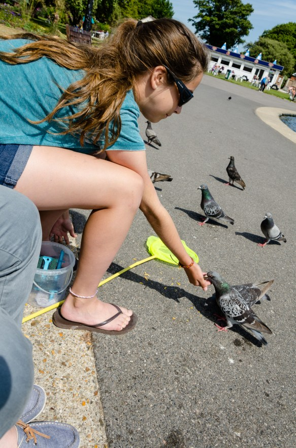 Not content with catching a crab, Lanie tries to catch a pigeon