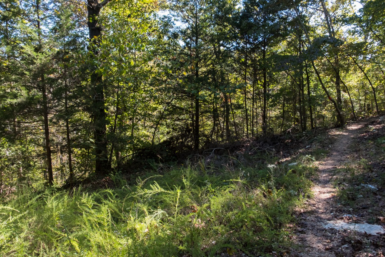 Busiek State Forest and Wildlife Area. Orange Trail. October 1, 2016 | www.ozarkswalkabout.com | Copyright © Gary Allman, all rights reserved