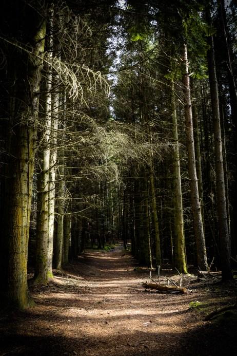 Larchwood path