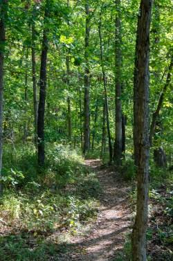 Busiek Red Trail