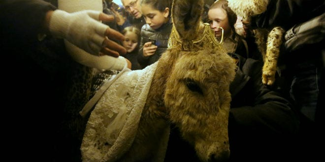 The firstborn donkey redeemed in a rare Biblical ritual on Mt. Zion. (Courtesy Behadrey Haredim)