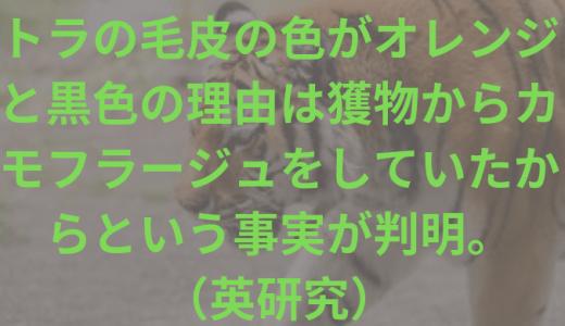 トラの毛皮の色がオレンジと黒色の理由は獲物からカモフラージュをしていたからという事実が判明。  (英研究)