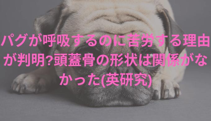 pug-title