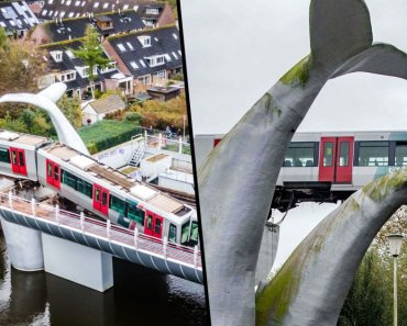 Train Crashes Through Barrier and Lands on Giant Whale Sculpture