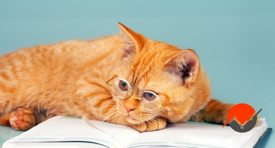 A picture of a kitty lying on a book