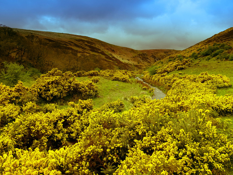 Harthope Valley near Breamish Valley