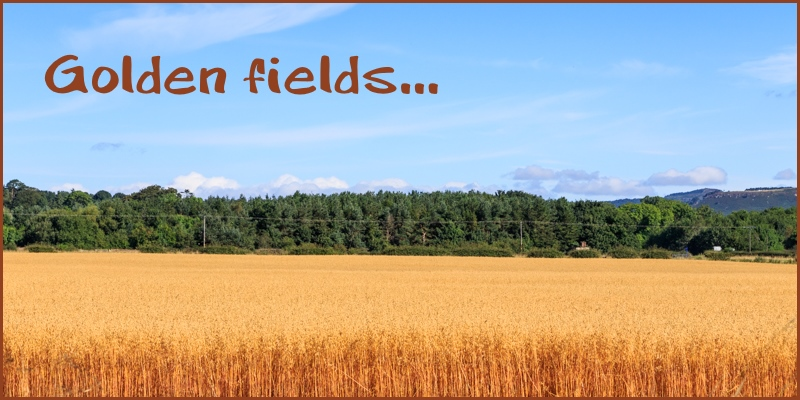 golden fields Powburn