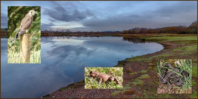 Branton Lakes Nature Reserve wildlife report 2016