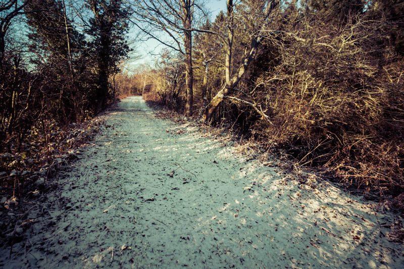 Crawley Dene snow (3P8A2459)