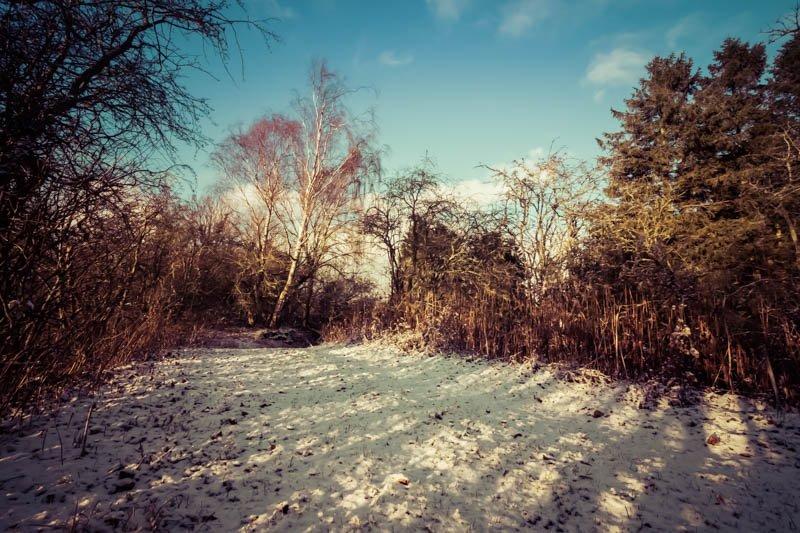 Crawley Dene snow (3P8A2502)