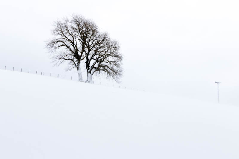 solitary tree in Siberian Bear weather