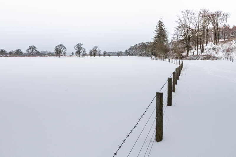 white out fields