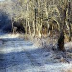 January frost