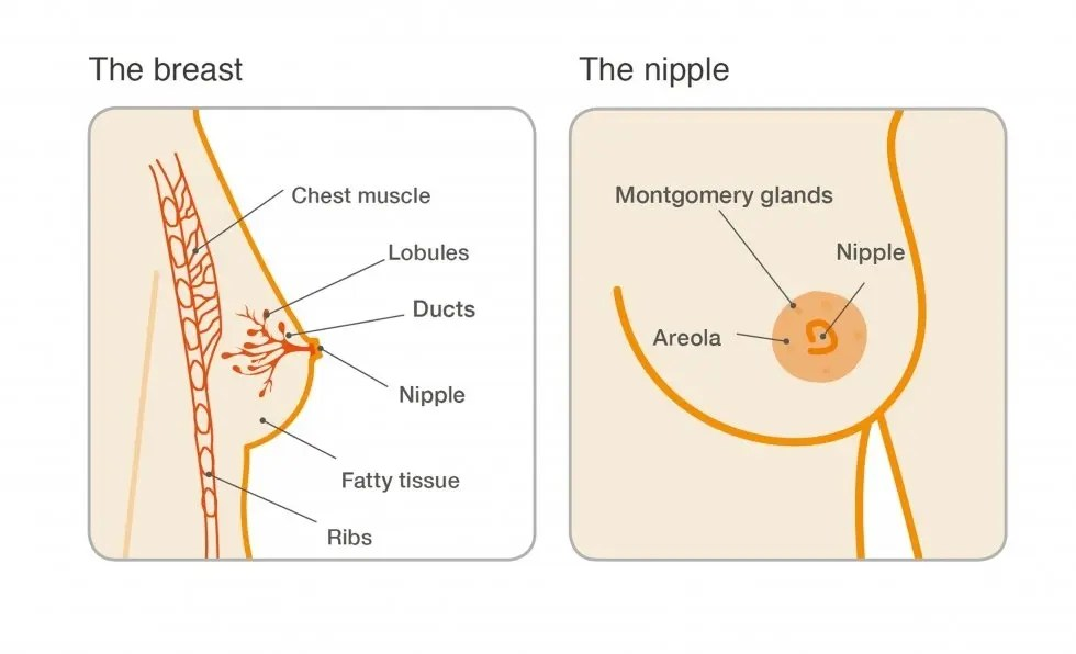 also breast cysts rh breastcancercare