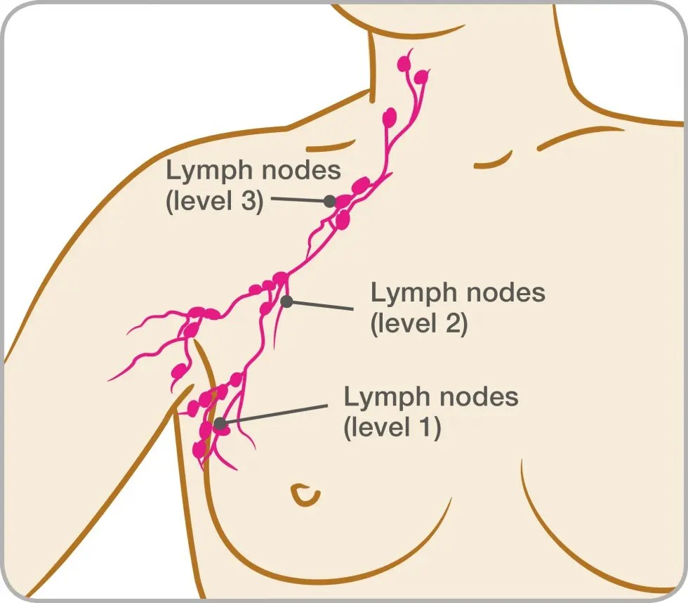 hight resolution of diagram of the lymph nodes