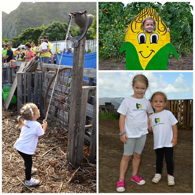 waimanalo farms
