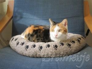 Kattenmand breien patroon