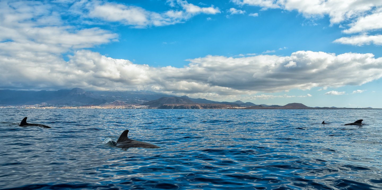 Whale watching teneriffa