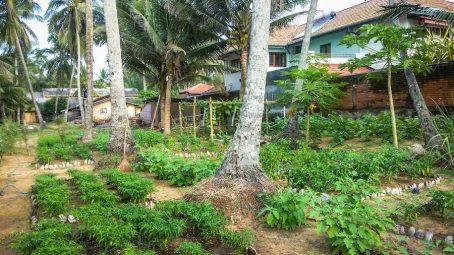 Sri Lanka - Ayurveda - Liane Ehlers-022