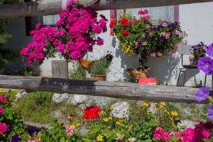 Blütenpracht im Park am Hotel - Familienurlaub Österreich