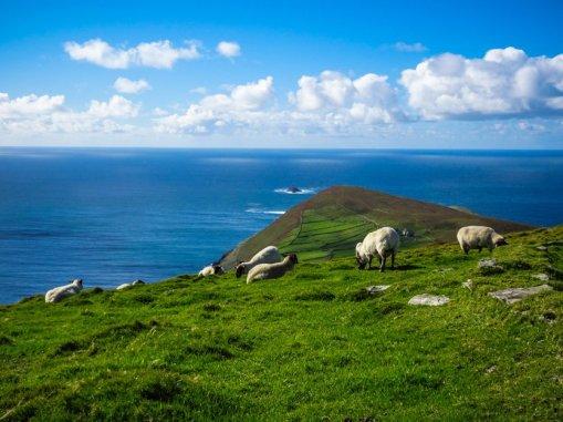 irland-brigitte-geiselhart-bed-breakfast-irland-04524