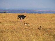 kenia-liane-ehlers-safari-in-kenia-014