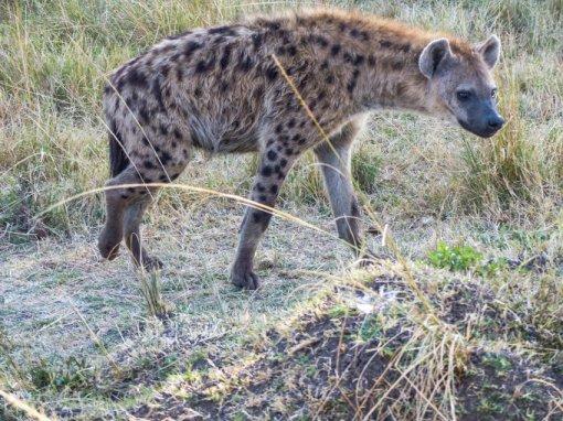 kenia-liane-ehlers-safari-in-kenia-022