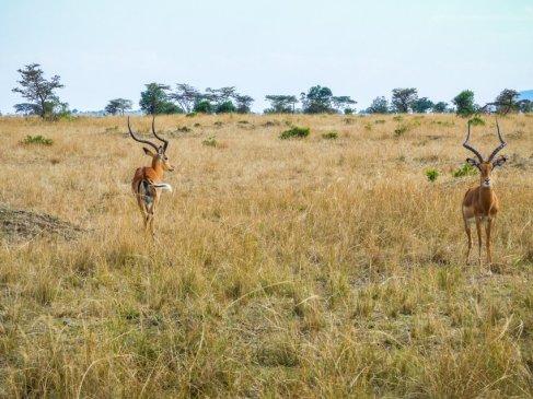 kenia-liane-ehlers-safari-in-kenia-023
