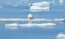 Abenteuer-Arktis-Elisabeth-Konstantinidis-Reiseblog-Breitengrad53-SC_0942