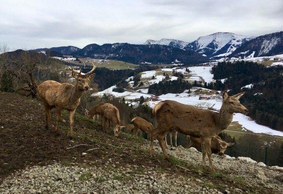 NEU Entspannen im Hotel Bergkristall Elisabeth Konstantinidis Reiseblog Breitengrad53 53 MG 9978 1 - Entspannen mit allen Sinnen in Oberstaufen