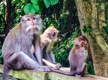 Reise nach Bali - Beste Reisezeit Bali - Tina Engler--10