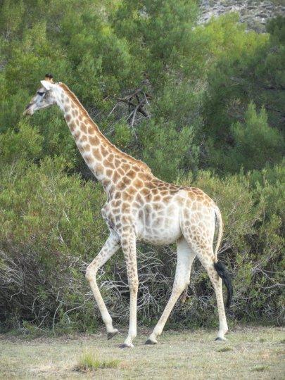 DSC05103 - Urlaub in Suedafrika - Eva Mayring