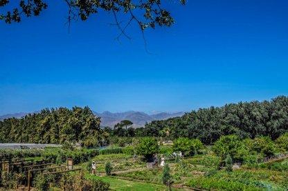 Urlaub in Südafrika - Jutta Lemcke - DSCF4794_korr