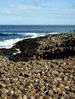 Giants Causeway - Urlaub in Irland - Wilfried Geiselhart (4 von 14)