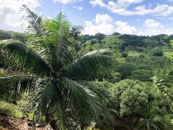 Heritage-Le-Telfair-Mauritius-Reisereportage-Elisabeth-Konstantinidis-Breitengrad53-MG_5104