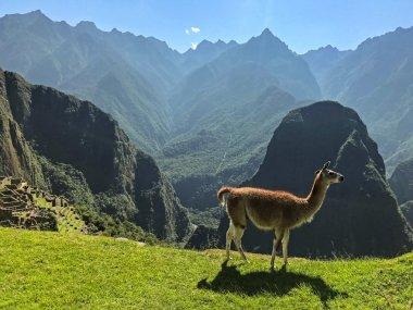 Machu Picchu - Rundreise Peru - Jutta Lemcke (9 von 14)