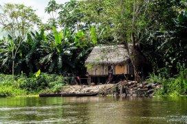 Safari Amazonas-DSCF6501_korr