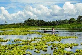 Safari Amazonas-DSCF6555_korr