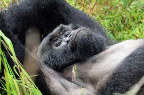 Uganda-Gorillas-Breitengrad53-Reiseblog-Jutta-Lemcke-SCF6099_korr1